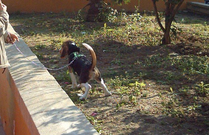 cómo educar un cachorro a hacer sus necesidades