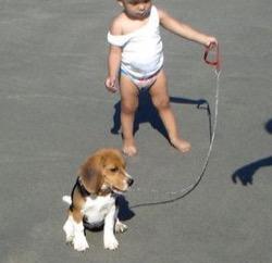 cachorro-beagle-y-nino
