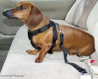 cinturon seguridad para perros