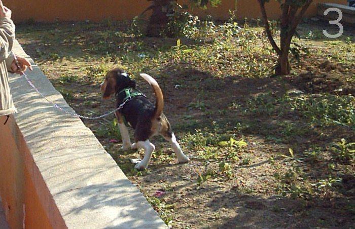 educar a un cachorro-3