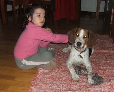 beagle con lunares