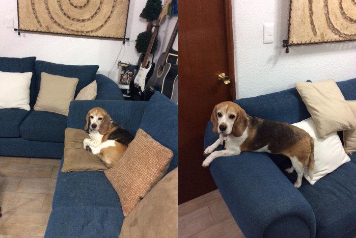 Milka-cumple-7años-sofa