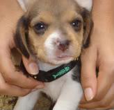 cachorrito-30dias