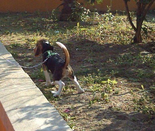 como educar a un cachorro-5