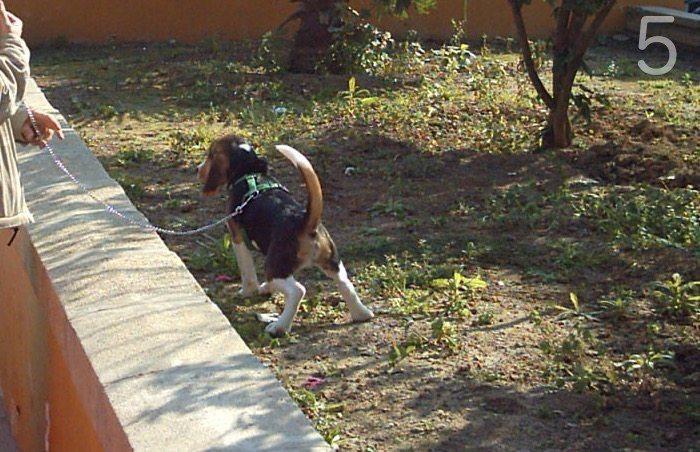 cómo educar a un cachorro-5