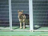residencia_canina