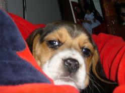 el cachorro blas de pequeño