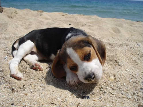 perrita Nut en la playa
