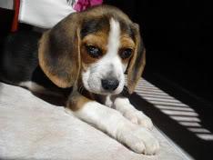cachorrita Nut echada al sol