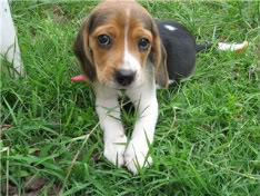 cachorrita Vima en la hierba