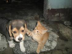gato_juega_con_beagle