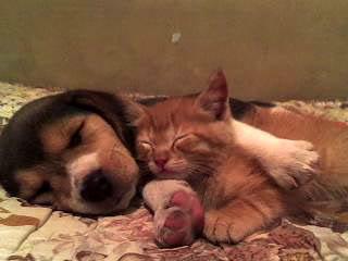perro_duerme_con_gato