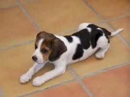 Google_beagle_almeria