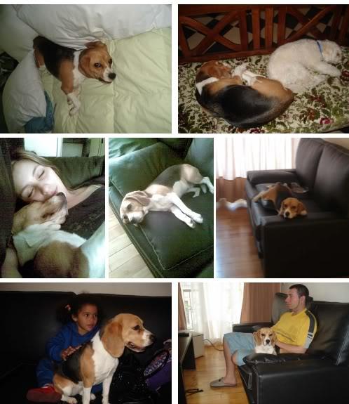 beagle-sofi-y-familia