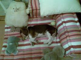 perro tico duerme