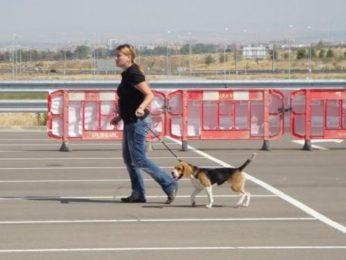 Bea paseand a Sidra en el concurso canino