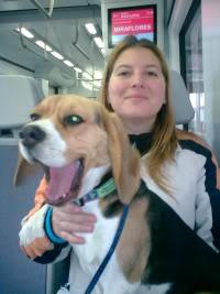 beagle-Sidra-9meses-autobus