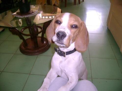 beagle_isis_mexico