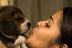 cachorro_beagle_beso