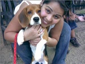 perro_beagle_venezuela