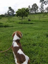 beagle-Taco-mexico