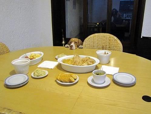 beagle comida mesa