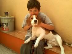 nino_y_perro_beagle_bownser