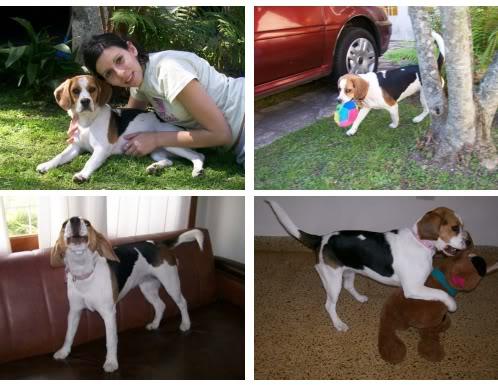 Beagle_Zoe_Argentina