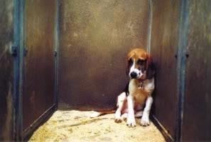 beagle_triste_encerrado