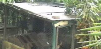 escape-perrita-beagle