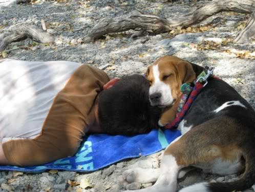 Beagle Vito con su dueño
