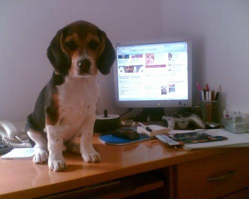 Beagle_Curro_ordenador