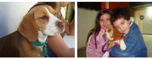 Beagle_Luna_de_Argentina