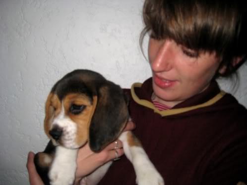 beagle_Homero_45dias
