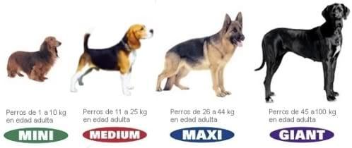 comida peso perros adultos