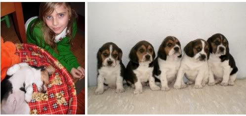 camada beagle Leo