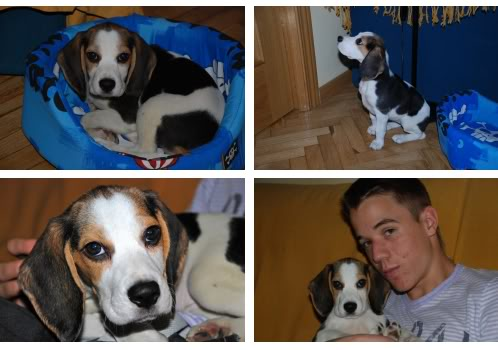 beagle_Linda_Madrid