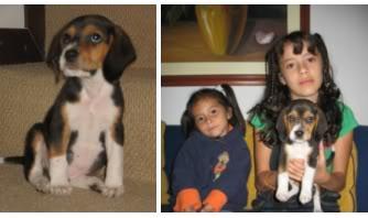 beagle_Pakito_Colombia