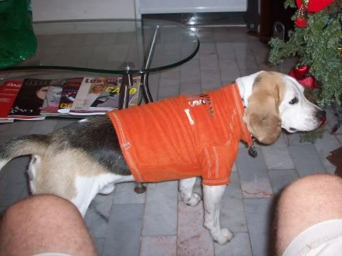 beagle_buddy_perdido