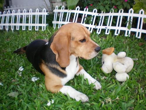 beagle-Loleto-Argentina