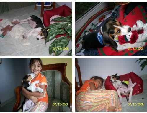 cachorro_beagle_Manolo