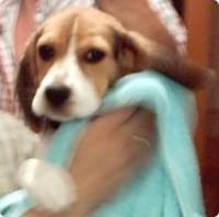 secando al perro después de lavarlo