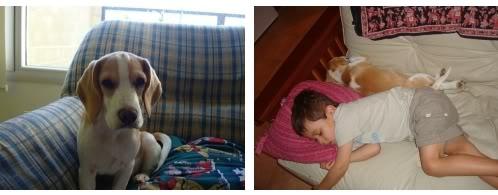 siesta-beagle-Emma-y-Liam