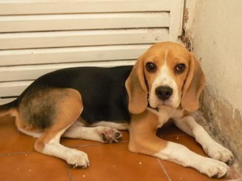 beagle-Otto-Argentina