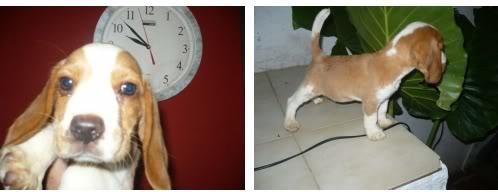 beagle-Rocky-Argentina