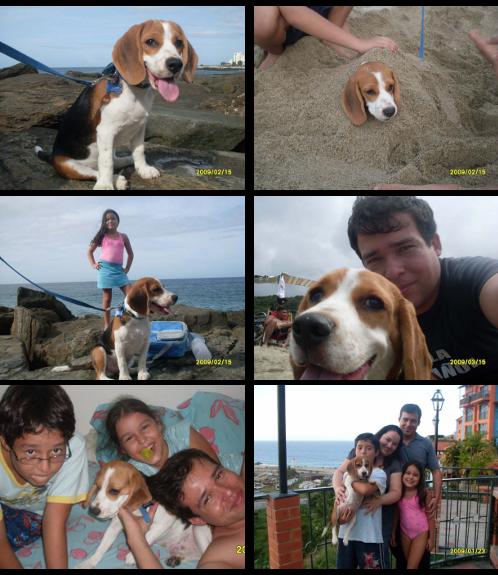 beagle-chiquito-familia