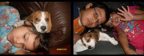 beagle-chiquito y los niños
