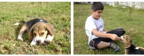 beagle_Snoopy_Guatemala