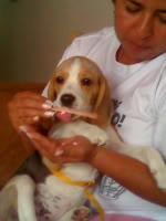 alimentando perro enfermo