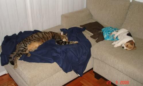 beagle-felipe-y-gato